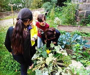 Bild: Auf der Mauer … Gärtnern mit Kindern im Coronajahr